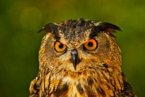 SB026 owl2