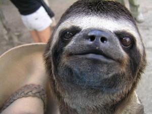 SB002 sloth