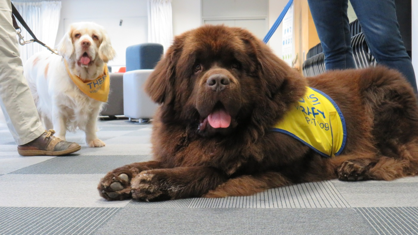 Pets As Therapy (PAT) dogs